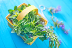 Aroma herb Royalty Free Stock Images