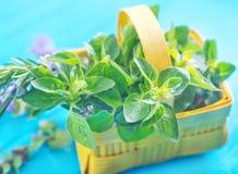 Aroma herb Stock Image