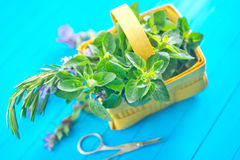 Aroma herb Royalty Free Stock Photo