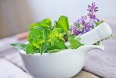 Aroma herb Stock Photo