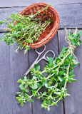 Aroma herb Royalty Free Stock Photography