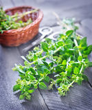 Aroma herb Stock Photography