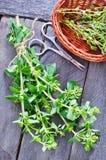 Aroma herb Royalty Free Stock Image