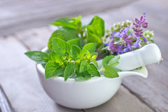 Aroma herb. On the wooden board stock images