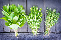 Aroma herbs Stock Images