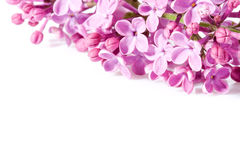 Aroma lilac flowers Stock Photo