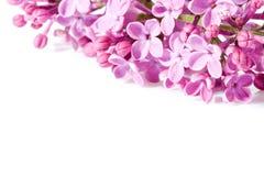 Aroma lilac flowers Stock Photo