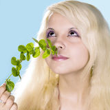 aroma of mint Royalty Free Stock Photos