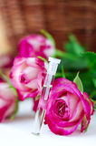 Aroma rose oil (natural perfume) Royalty Free Stock Image