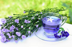 Aroma violet tea and blossoms. With green background Royalty Free Stock Image