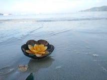 Aromakaars in kokosnotenshell die op het strand drijven stock foto