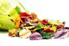 Aromat suszący kwiat kolorowy Zdjęcia Royalty Free