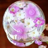 aromata pucharu świeczek kwiaty Zdjęcia Stock