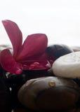 aromatherapy放松温泉 免版税库存图片