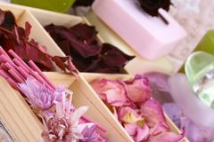 aromatherapy春天 图库摄影