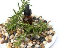 aromatherapy迷迭香 免版税图库摄影