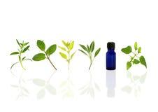 aromatherapy重要草本油 库存照片