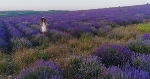 Aromatherapy ενός κοριτσιού σε έναν ανθίζοντας lavender τομέα Εναέριος βλαστός φιλμ μικρού μήκους