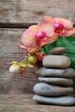 aromatherapy καθορισμένη SPA Στοκ φωτογραφίες με δικαίωμα ελεύθερης χρήσης