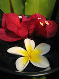 aromatherapy κύπελλο Στοκ Εικόνες