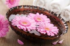aromatherapy λουλούδια κύπελλων Στοκ Φωτογραφίες