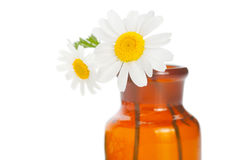 Aromatherapy. Composition on white background Stock Photography