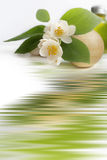 aromatherapy 免版税库存照片