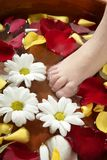Aromatherapy, Blumenfußbad, rosafarbenes Blumenblatt Lizenzfreies Stockbild