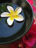 Aromatherapy Bowl. Aromatherapy treatment bowl with flowers and perfumed water Royalty Free Stock Photo