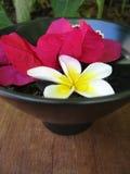 Aromatherapy Bowl Stock Image
