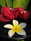Aromatherapy Bowl Stock Photo