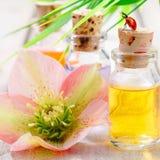 aromatherapy brunnsortthreatment Arkivbilder