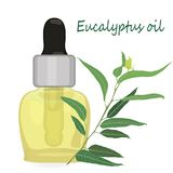 Aromatherapy d'illustration de vecteur d'huile essentielle d'eucalyptus illustration stock