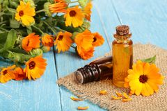 Aromatherapy essential oil with fresh marigold flowers on blue wooden background. Calendula oil Stock Photo
