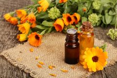Aromatherapy essential oil with fresh marigold flowers on old wooden background. Calendula oil Stock Images