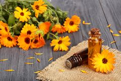 Aromatherapy essential oil with fresh marigold flowers on old wooden background. Calendula oil Stock Photography