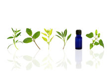 Aromatherapy Essential Oil Herbs. Herb leaf sprigs of hyssop, chocolate mint, golden marjoram, sage, and bergamot and an essential oil bottle, over white stock photo