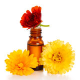 Aromatherapy essential oil with marigold. Flowers, isolated white background. Studio shot Stock Photos