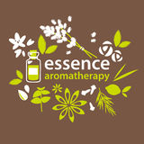 Aromatherapy, fleurs et plantes illustration libre de droits