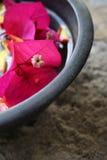 Aromatherapy Flower Bowl Royalty Free Stock Photo