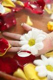 Aromatherapy, flowers hand bath, rose petal Stock Photos