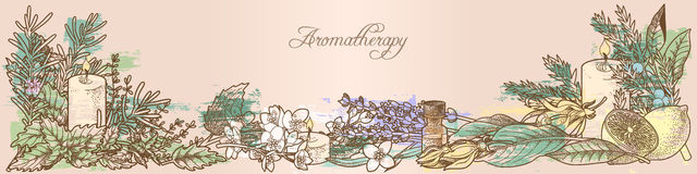 Aromatherapy herbs. Composition made of aromatherapy herbs royalty free illustration