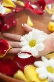 Aromatherapy, het bad van de bloemenhand, nam bloemblaadje toe Stock Foto's