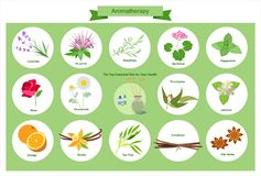 Aromatherapy - Illustratie stock illustratie