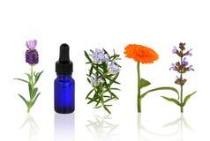 Aromatherapy Kräuter und Blumen Stockbild