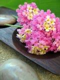 Aromatherapy Lantana Stock Images