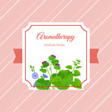 Aromatherapy medical herbs label design Royalty Free Stock Photo