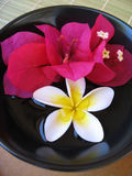 aromatherapy miskę Zdjęcia Royalty Free