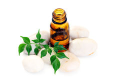 Aromatherapy oil Stock Photography