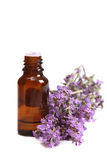 Aromatherapy oil and lavender. Flower isolated on white background Stock Image